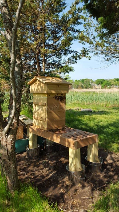 Μέλισσες μελιού στην κυψέλη στοκ εικόνα