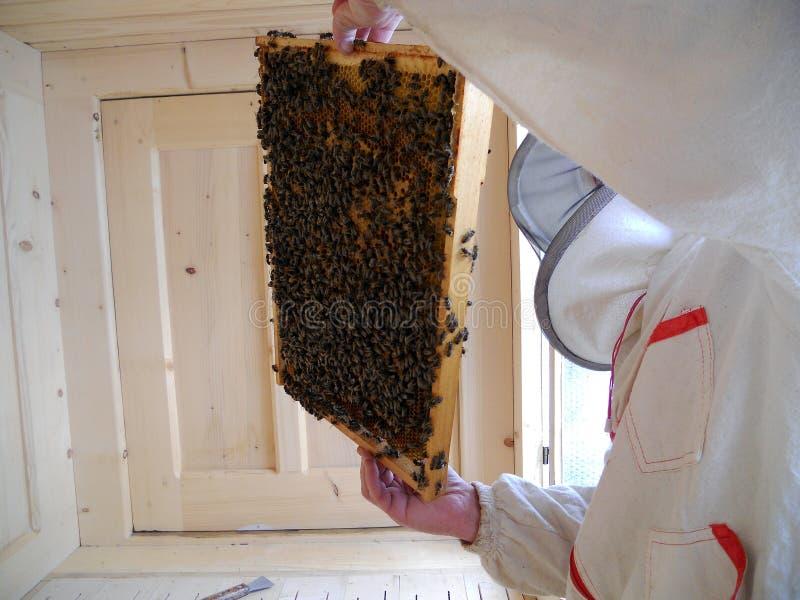 Μέλι κυψελών στοκ εικόνες με δικαίωμα ελεύθερης χρήσης