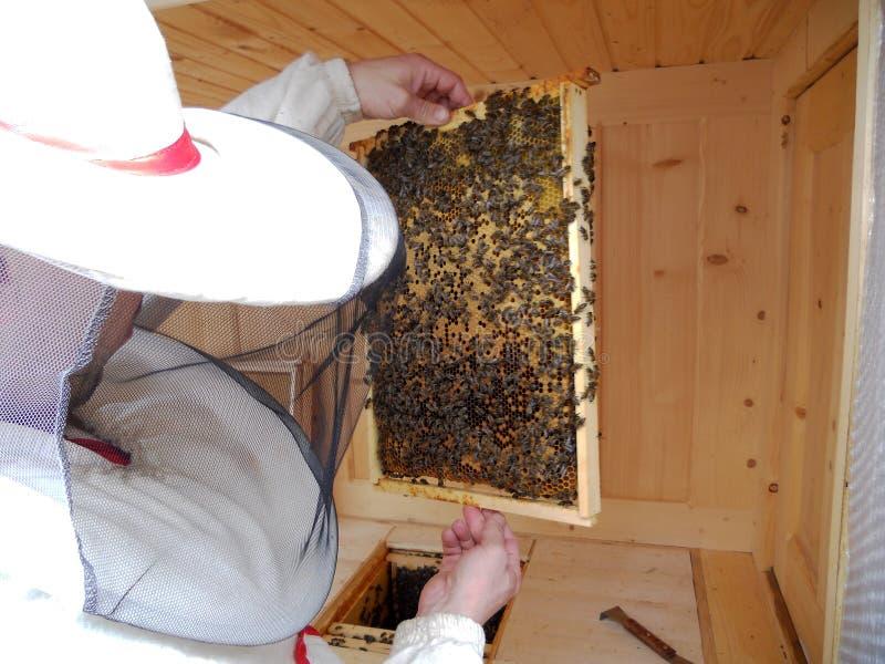 Μέλι κυψελών στοκ φωτογραφία