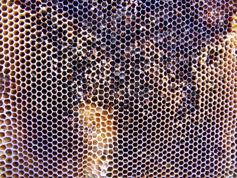 Μέλι κυψελών στοκ φωτογραφίες