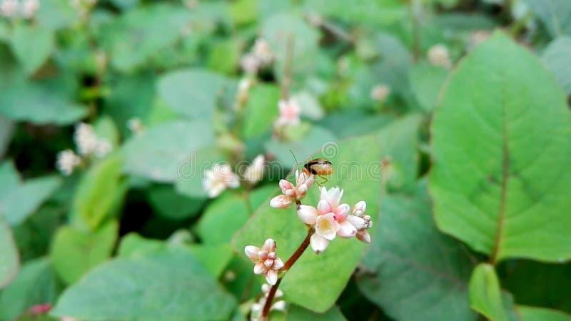 Μέλι που συλλέγει το χρόνο στοκ φωτογραφίες με δικαίωμα ελεύθερης χρήσης