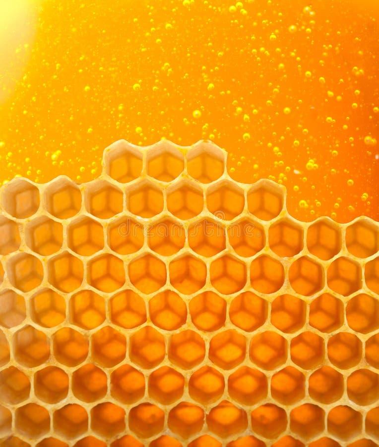 Μέλι στη χτένα στοκ εικόνες