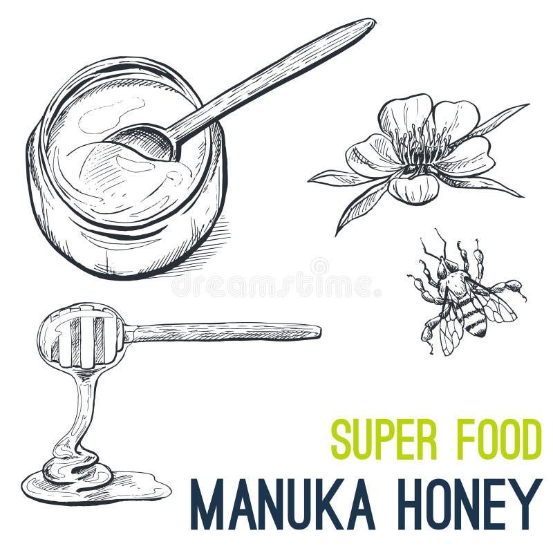 Μέλι Manuka, έξοχο διάνυσμα σκίτσων τροφίμων συρμένο χέρι διανυσματική απεικόνιση