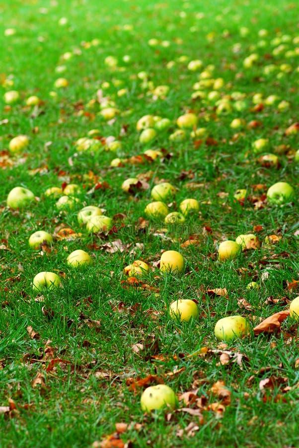 μήλα πεσμένος στοκ φωτογραφία με δικαίωμα ελεύθερης χρήσης