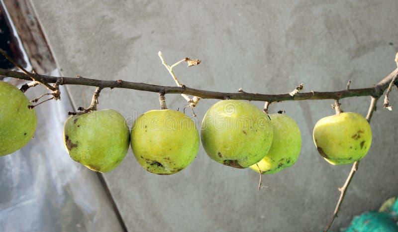 Μήλα σε έναν γυμνό κλάδο E στοκ εικόνες