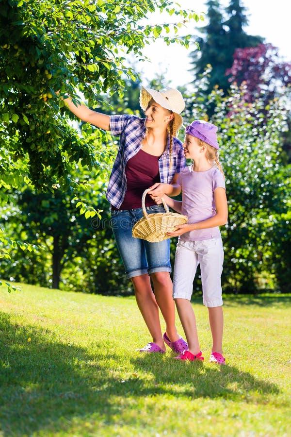 Μήλα συγκομιδής μητέρων και παιδιών από το δέντρο στοκ εικόνα με δικαίωμα ελεύθερης χρήσης