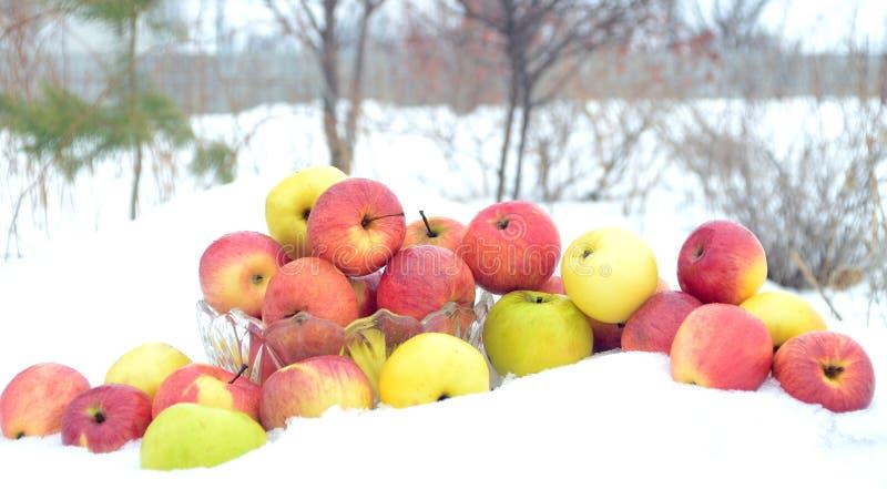 Μήλα το χειμώνα στοκ εικόνες