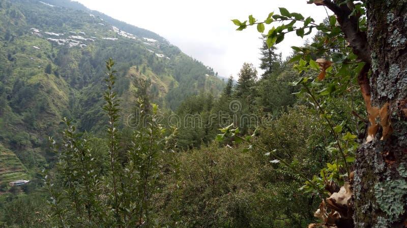 Μήλα Shimla βουνών στοκ εικόνα με δικαίωμα ελεύθερης χρήσης