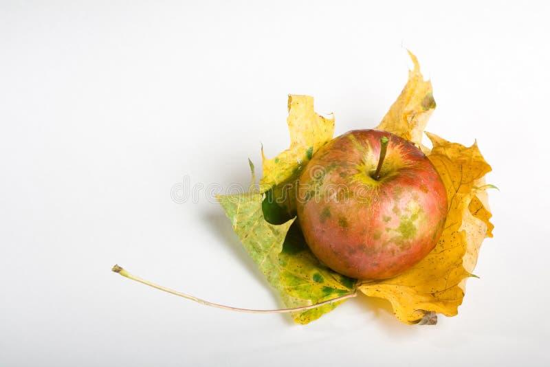 Μήλο και φύλλο στοκ φωτογραφίες με δικαίωμα ελεύθερης χρήσης