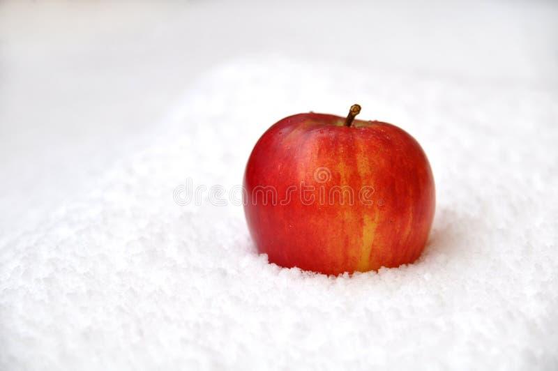 Μήλο στο χιόνι στοκ φωτογραφία