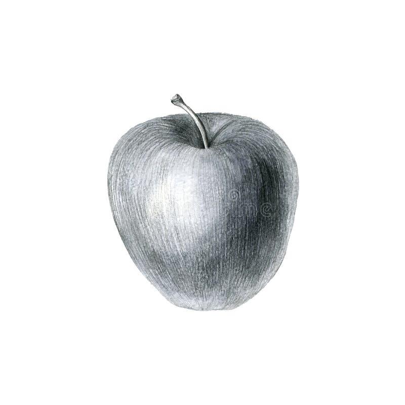Μήλο σχεδίων μολυβιών στοκ εικόνες