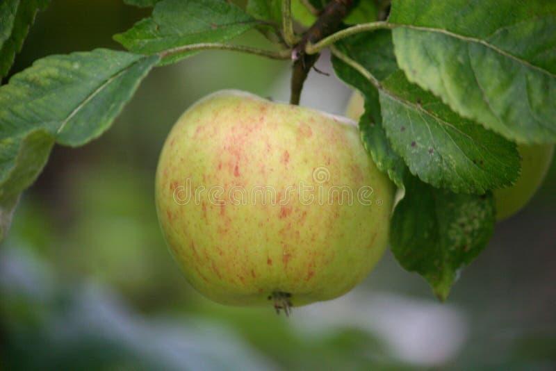 Download μήλο στοκ εικόνα. εικόνα από κόκκινος, φάτε, ένωση, καρπός - 17053357