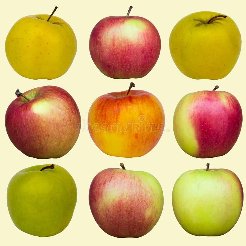 μήλα διαφορετικά στοκ εικόνα με δικαίωμα ελεύθερης χρήσης