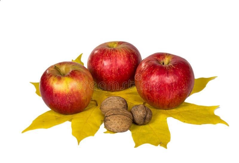 Μήλα και καρύδια στα φύλλα σφενδάμου φθινοπώρου στοκ φωτογραφία