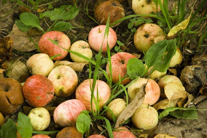 Μήλα, μήλο, φρούτα, κόκκινο, υπόβαθρο, φρέσκο, φθινόπωρο, πτώση στοκ εικόνες