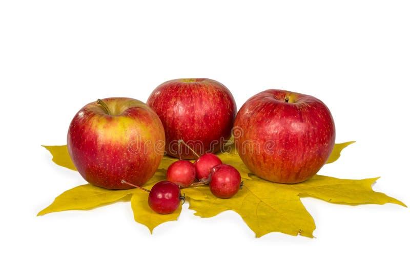 Μήλα με τα φύλλα φθινοπώρου στοκ φωτογραφία με δικαίωμα ελεύθερης χρήσης