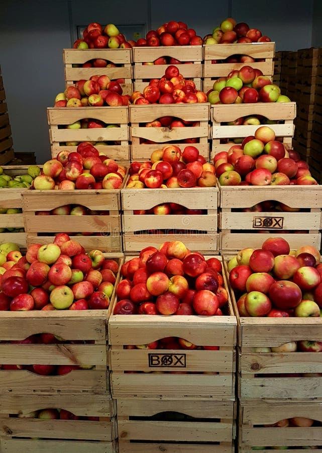 Μήλα στα ξύλινα κιβώτια στοκ φωτογραφία