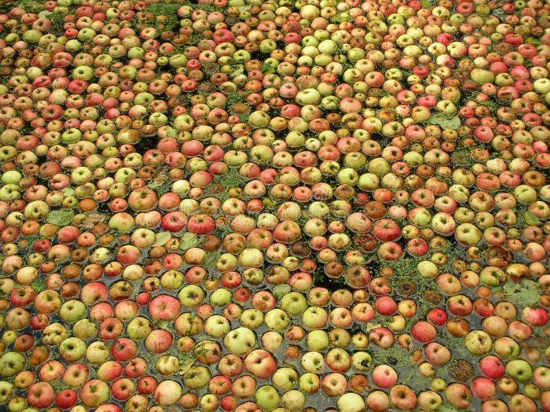 Μήλα στο νερό στοκ φωτογραφίες