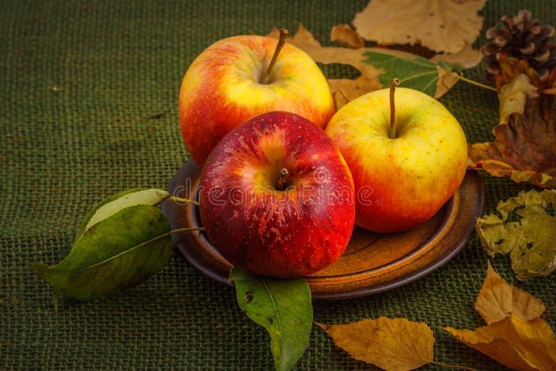 Μήλα φθινοπώρου στοκ εικόνα