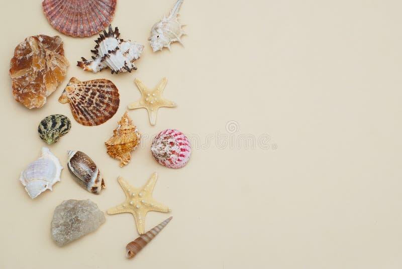 Μίγμα θάλασσας των κοχυλιών και του αστερία, πέτρες Θερινό υπόβαθρο διακοπών ANS στοκ εικόνα με δικαίωμα ελεύθερης χρήσης