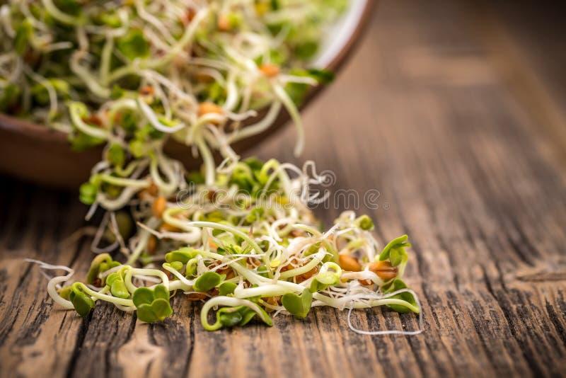 Μίγμα των βλαστημένων σπόρων στοκ φωτογραφία με δικαίωμα ελεύθερης χρήσης