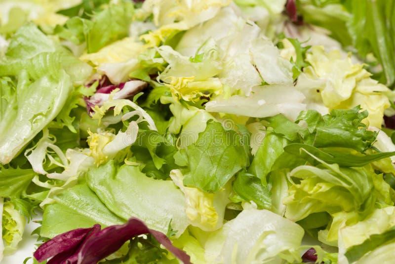Μίγμα των διαφορετικών φρέσκων πράσινων φύλλων σαλάτας στο πιάτο στοκ φωτογραφία