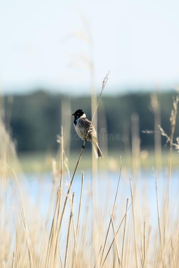 Μίγμα των πουλιών στοκ εικόνες με δικαίωμα ελεύθερης χρήσης