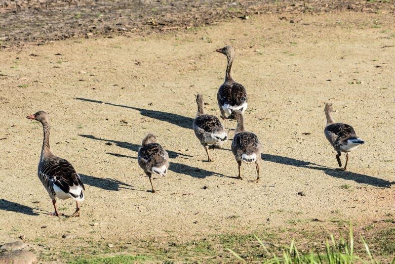 Μίγμα των πουλιών στοκ φωτογραφία