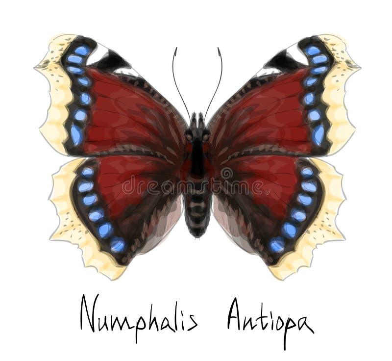 μίμησης watercolor numphalis πεταλούδων antiopa απεικόνιση αποθεμάτων