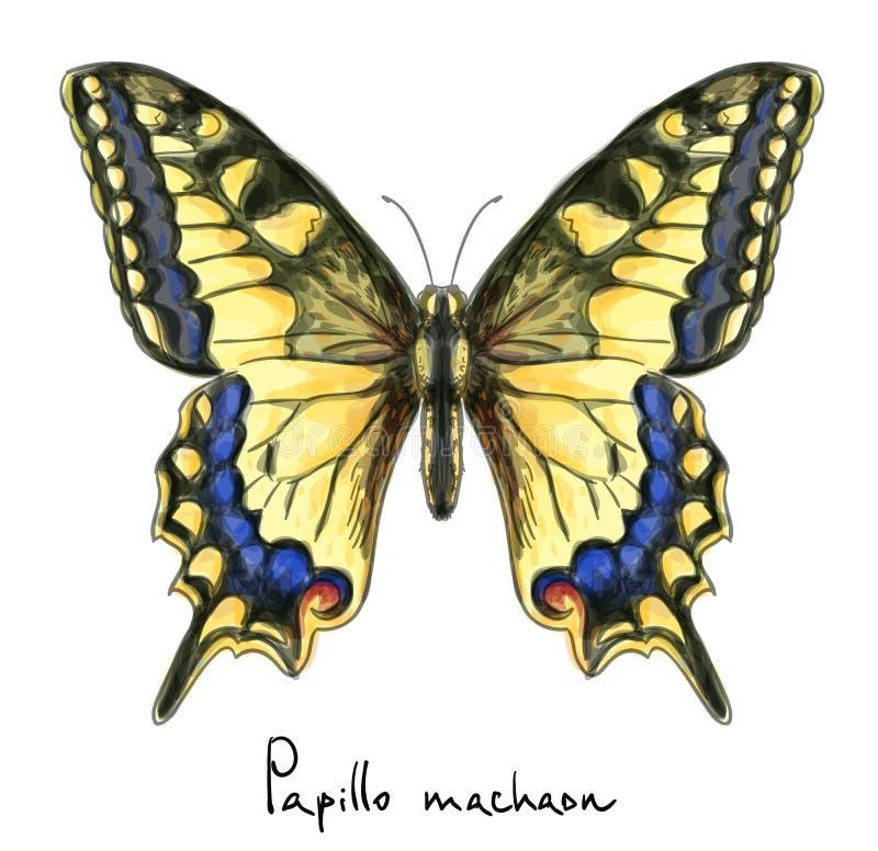μίμησης watercolor papillo machaon πεταλούδων απεικόνιση αποθεμάτων