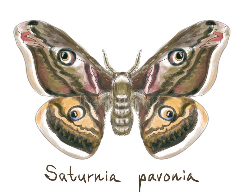 μίμησης watercolor saturnia pavonia πεταλούδων ελεύθερη απεικόνιση δικαιώματος