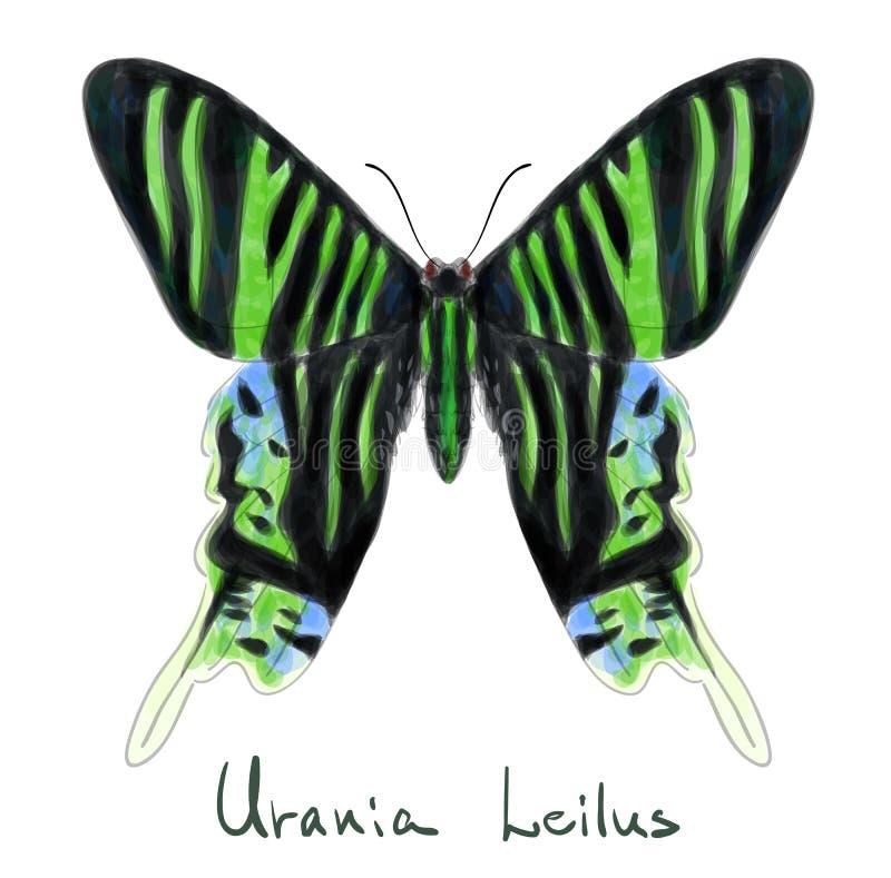μίμησης watercolor urania leilus πεταλούδων διανυσματική απεικόνιση