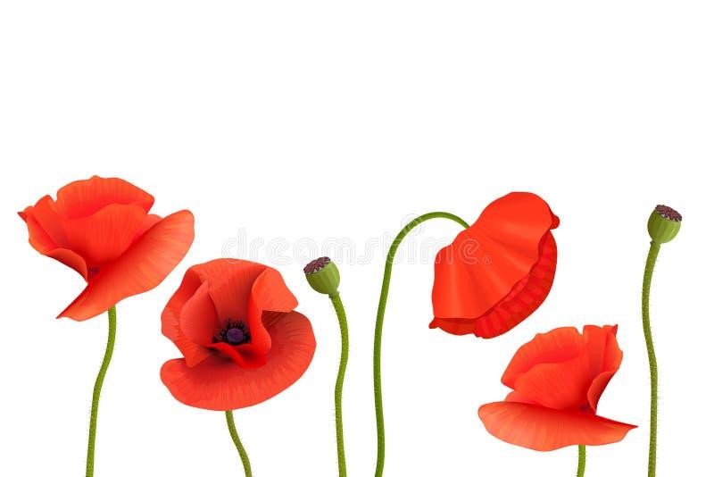 Μίσχοι και λουλούδια παπαρουνών στο κατώτατο σημείο Διάστημα αντιγράφων, ημέρα ενθύμησης πλαίσιο λουλουδιών, πρότυπο καρτών διανυσματική απεικόνιση