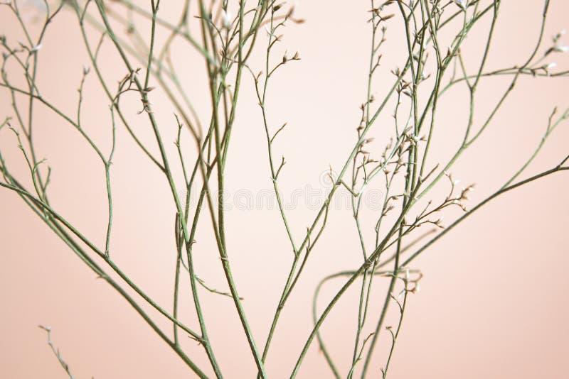 Μίσχοι λουλουδιών στο ρόδινο υπόβαθρο στοκ εικόνες