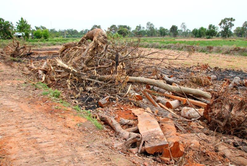 Μίσχος δέντρων μετά από την αποδάσωση στοκ φωτογραφία