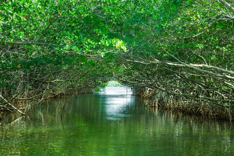 Μαγγρόβια οικοτουρισμού everglades στοκ φωτογραφία με δικαίωμα ελεύθερης χρήσης