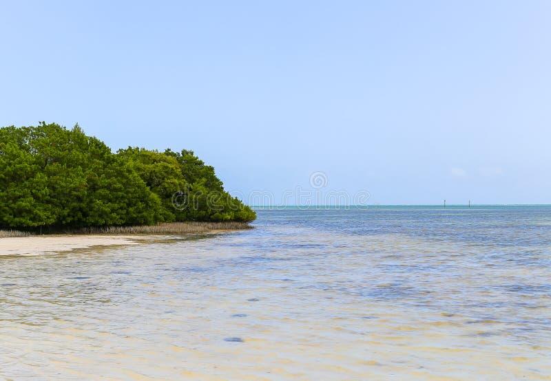 Μαγγρόβια στην παραλία στοκ φωτογραφίες με δικαίωμα ελεύθερης χρήσης