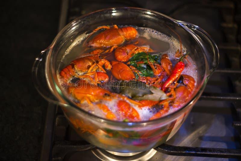 Μαγειρεύοντας αστακοί στο διαφανές δοχείο γυαλιού στοκ φωτογραφία με δικαίωμα ελεύθερης χρήσης