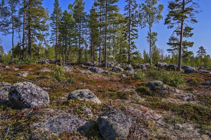 Μαγικά βόρεια σύνορα witn Φινλανδία της Σουηδίας στοκ εικόνα με δικαίωμα ελεύθερης χρήσης