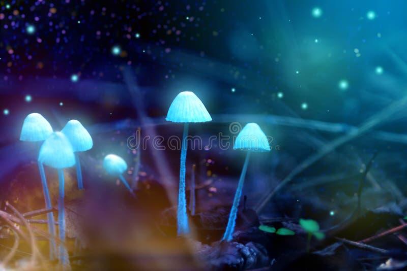 Μαγικά λαμπερά μανιτάρια στο δάσος, παραμύθι στοκ εικόνες