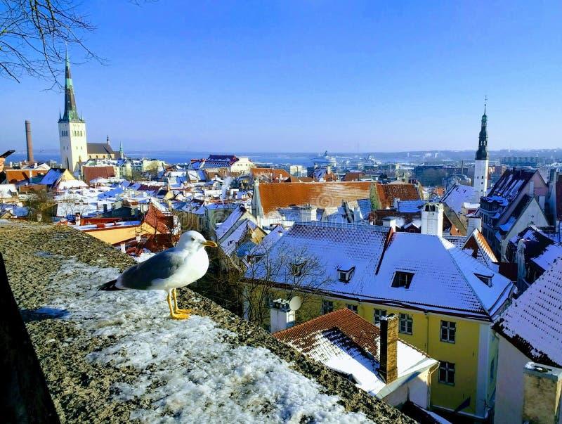 μαγική άποψη του παλαιού Ταλίν σε 100 έτη Estonia& x27 ανεξαρτησία του s στοκ φωτογραφία με δικαίωμα ελεύθερης χρήσης