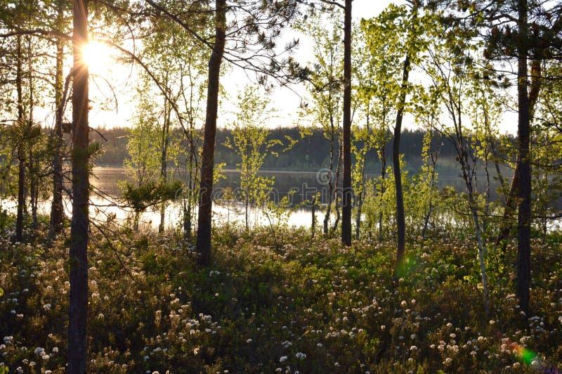 Μαγική δασική περισυλλογή λιμνών ελών λουλουδιών και χαλαρώνοντας εικόνα στοκ φωτογραφία