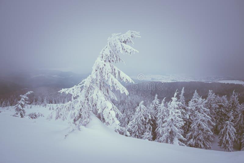μαγική νύχτα τοπίων Χριστουγέννων στοκ φωτογραφίες με δικαίωμα ελεύθερης χρήσης
