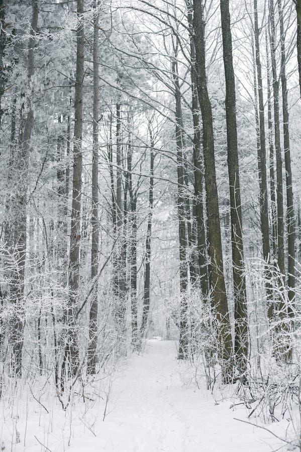 Μαγική ομιχλώδης και παγωμένη χειμερινή δασική σκηνή Πλάτη τοπίων της Misty στοκ φωτογραφίες με δικαίωμα ελεύθερης χρήσης