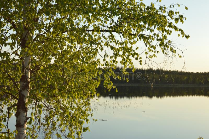 Μαγική περισυλλογή λιμνών σημύδων δασική και χαλαρώνοντας εικόνα στοκ φωτογραφία με δικαίωμα ελεύθερης χρήσης