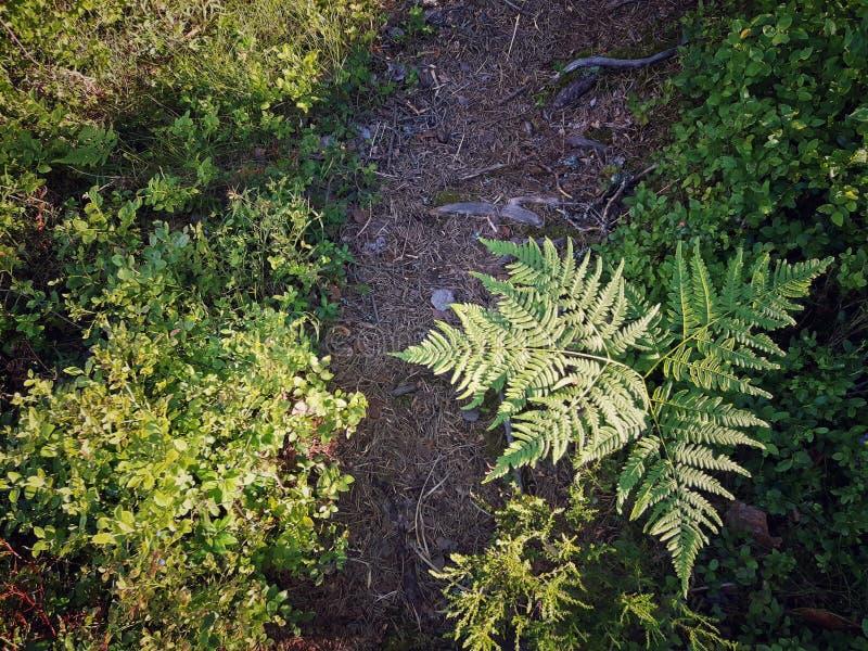 Μαγική πορεία μέσω του δάσους στοκ εικόνα