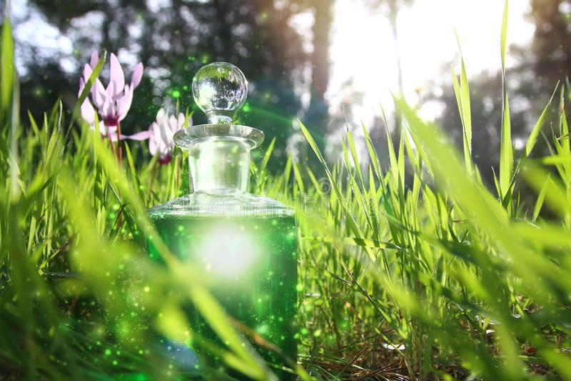 Μαγική φίλτρο σκόνης νεράιδων στο μπουκάλι στο δάσος στοκ εικόνες με δικαίωμα ελεύθερης χρήσης