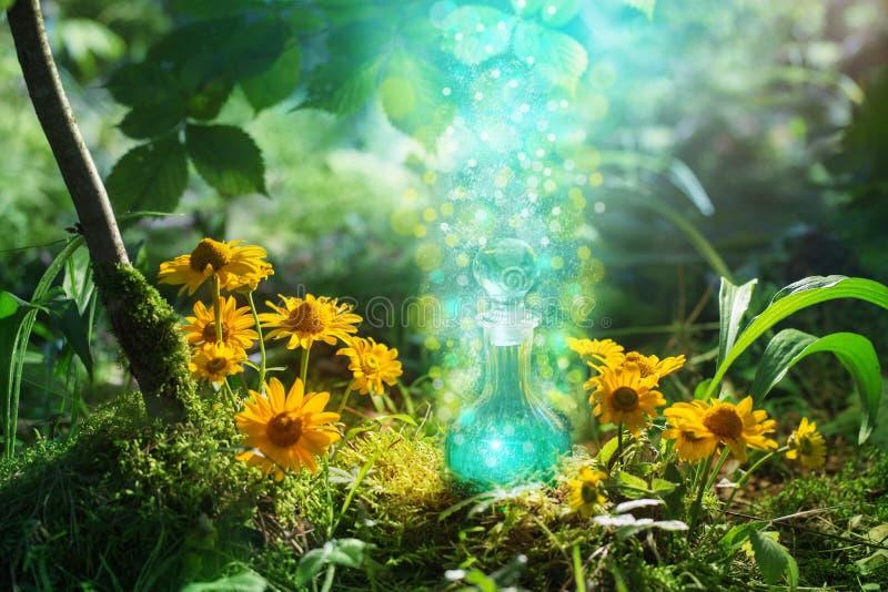 Μαγική φίλτρο στο μπουκάλι στο δάσος στοκ φωτογραφίες με δικαίωμα ελεύθερης χρήσης