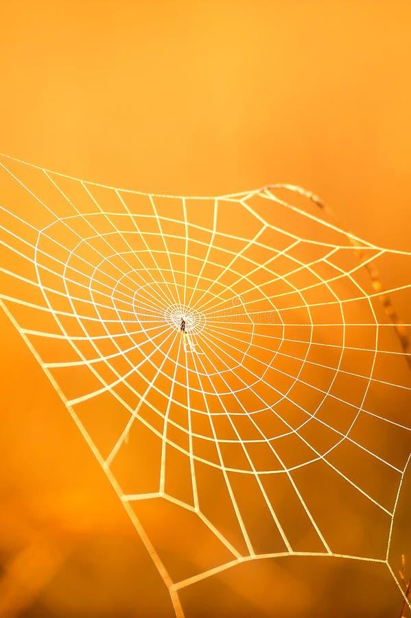 Μαγικός ιστός αράχνης με τη δροσιά στο χειμερινό πρωί στοκ εικόνες