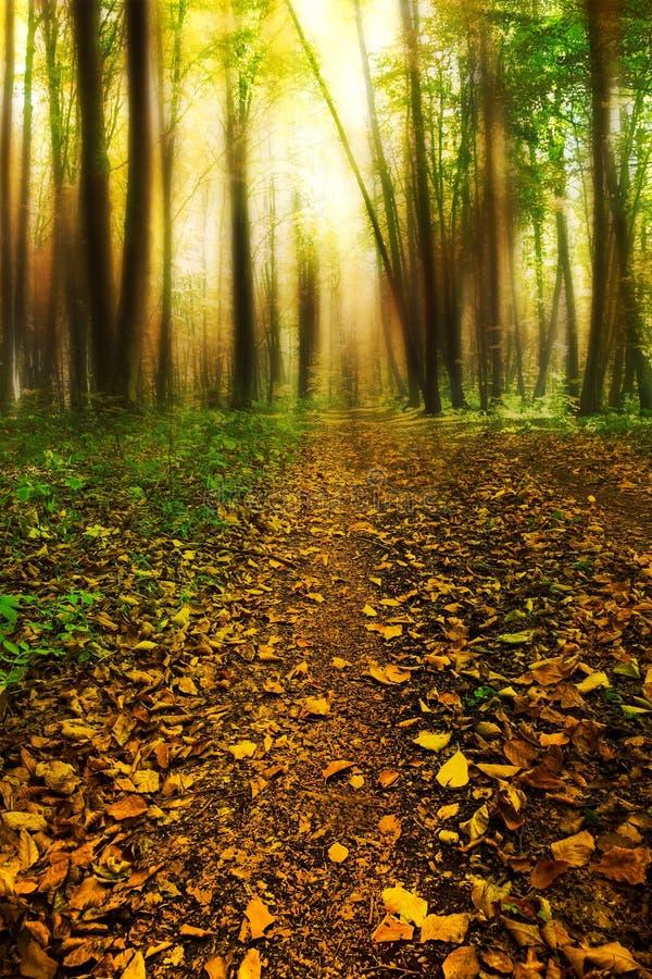 Μαγικός δρόμος στο δάσος με τα ξηρά φύλλα και τα μυστήρια δέντρα στοκ φωτογραφία